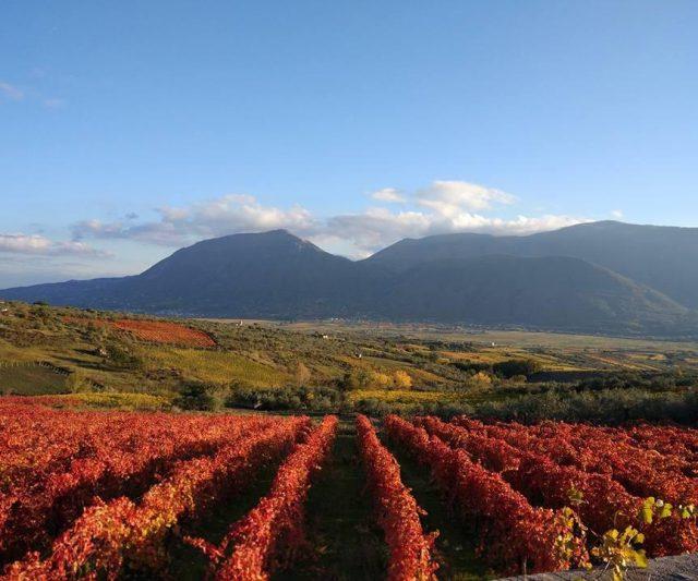 Convention nazionale Città del Vino, Sannio Falanghina 2019 presenta lo statuto del paesaggio rurale
